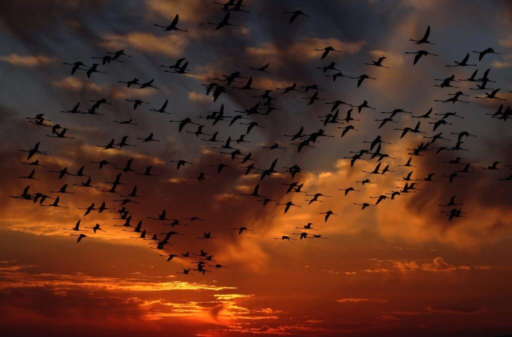 pixabay flamingos-against sky