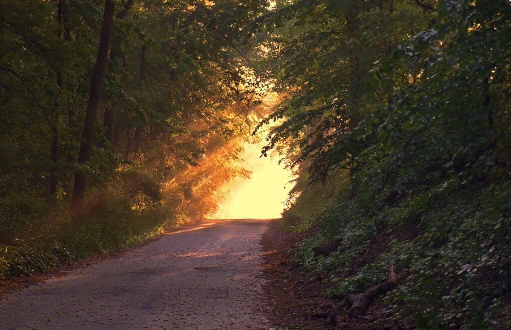 pixabay sunlight-forest road
