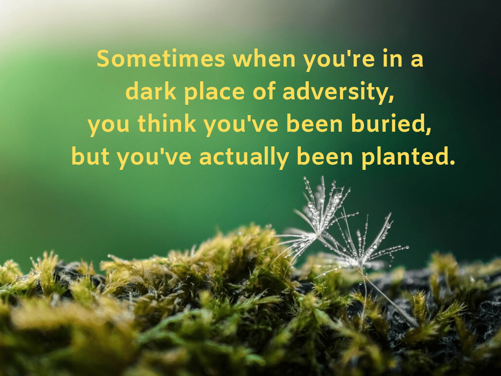 """Closeup Image of Forest Floor with text: """"Sometimes when you're in a dark place of adversity, you think you've been buried, but you've actually been planted."""""""