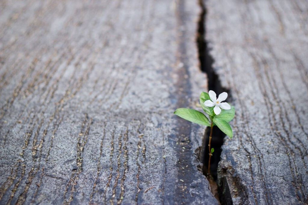 white flower growing on crack street, soft focus, blank text